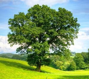 boomverzorging-tuin-onderhoud-tuinman-offerte